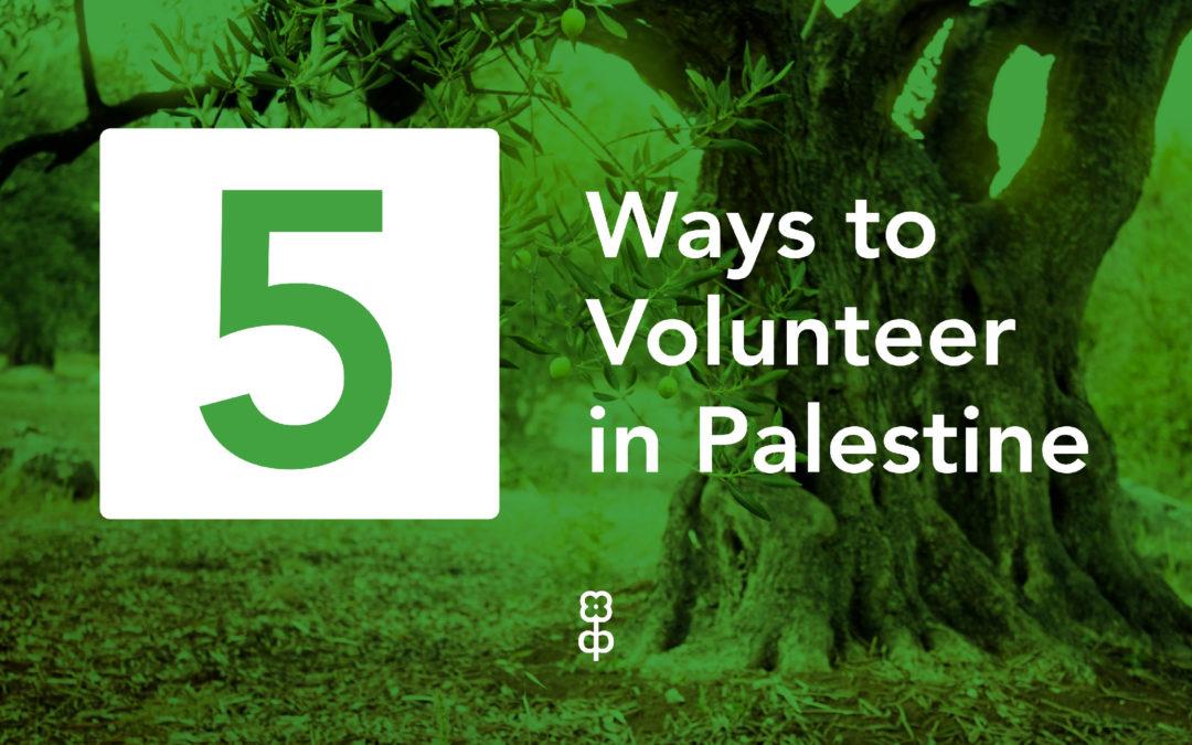 5 ways to volunteer in Palestine in the summer